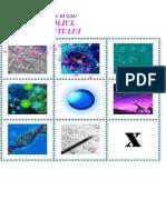 CHIMIE_CL-IX_XII_PORTOFOLIUL LABORANTULUI CHIMIST (1).doc