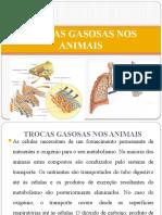 Trocas gasosas nos animais [Guardado automaticamente].pptx