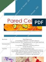 ParedCelular2020.pdf