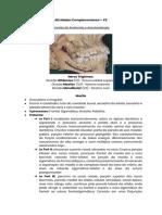 Cirurgia - Anatomia e Anestesiologia