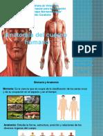 trabajo-de-educacion-fisica-anatomia [Reparado]