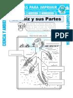 Ficha-La-Raiz-y-sus-Partes-para-Cuarto-de-Primaria (1)