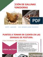 PRODUCCION DE GALLINAS PONEDORAS