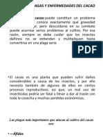 CONTROL DE PLAGAS Y ENFERMEDADES DEL CACAO diapositivas