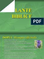 plante_biblice