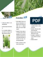 Trifoliado quimica organica 2.docx