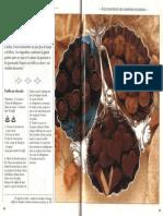 Recette-confiseries-pdf (3).pdf