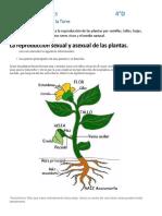 la reproducción sexual y asexual de las plantas