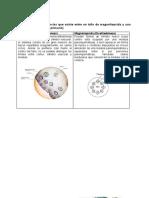 246950652-Cuestionario-Anatomia-Del-Tallo.docx