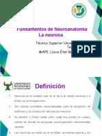 La_neurona(3)