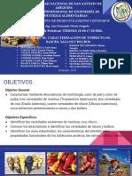 Práctica N°02 CARACTERIZACIÓN DE TUBÉRCULOS, RAICES, TALLOS Y BULBOS.pptx