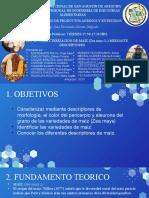 PRACTICA 3 - DIAPOSITIVAS MAIZ- VIERNES 3.50 PM.pptx