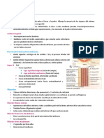 Anatomia 2 (1).pdf