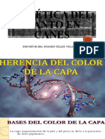 CINOLOGIA 2.pptx