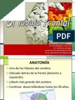 2-LOBULO FRONTAL
