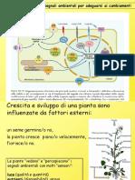 fitocromo, fotomorfogenesi e orientamento delle piante nello spazio .pdf