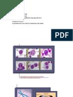 Aulas - 5 a 11.pdf