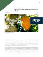 Jornal Bahia Online - Clone de cacaueiro da Ceplac garante mais de 100 arrobas por hectare