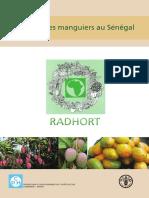 culture mangue