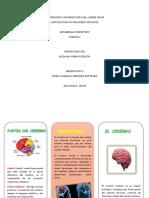 FUNCIONES DEL CEREBRO FOLLETO..pdf