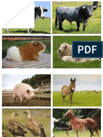 animales y plantas de guadalupe