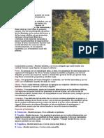 Anon - Arboles Y Arbustos Pdf