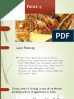 Egg (Layer Farming)