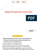 1-Appareil génital masculin.pdf