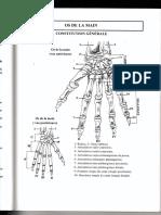 5 les os de mains _schema