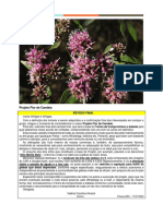 2020 07 17 - Projeto Flor de Candeia - Consolidado