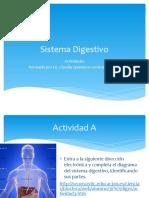 Actividad Sistema Digestivo y Excretor