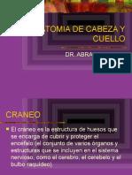 CRANEO%20Y%20CARA%20-2.pptx