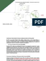 DIAGRAMA DE FLUJO DE LAS AGUAS RESIDUALES DE LA INDUSTRIA MINERA – PROCESO DE LODOS DE ALTA DENSIDAD (HDS)
