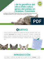 Exposición gatos
