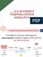LEZIONE 8 Ciclo di Krebs e fosforilazione ossidativa