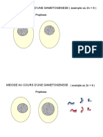 meiose.ppt
