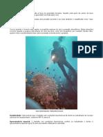 Trabalhos em Condições Hiperbáricas - Submersos