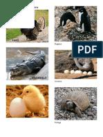 Animales Oviparos Viviparos y Ovoviviparos