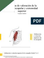 Técnicas de valoración de la cintura escapular y extremidad superior [Autoguardado]