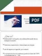 Laringotraqueitis infecciosa aviar.pptx