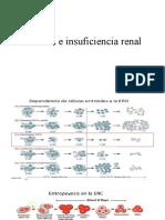Anemia e insuficiencia renal