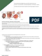 Resumen 1, 2 y 3 Nefrología (anatomía y fisiología renal, estudio del paciente renal, hidroelectrolitos)