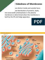 cellmembranes2