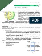 16 - Metabolismo das Lipoproteínas.pdf