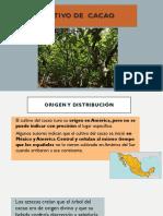 Cultivo de  cacao-convertido (1).pdf