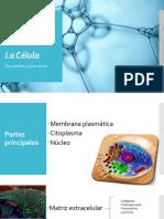 Las Células Sus Partes y Funciones