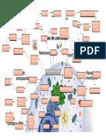 mapa mental importancia celular biologia humana