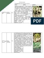 enfermedades de la soja.docx