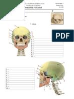 Ficha_AF-4 _osteologia__20-21