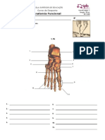 Ficha_AF-2 _osteologia__20-21
